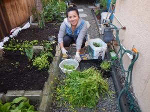 Cô chủ tiệm nail trồng vườn rau Việt ở Mỹ để bớt nhớ quê nhà